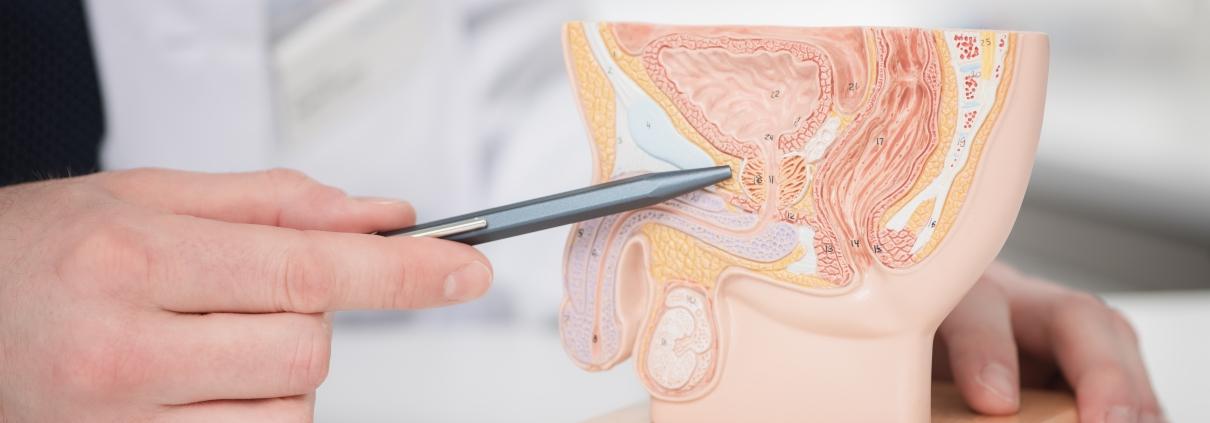 ZUN - Zentrum für Urologie und Nephrologie, Bern - Krankheitsbilder